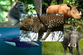 collage especies en peligro de extincion WWF